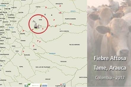 COLOMBIA: NOTIFICACIÓN FOCO DE FIEBRE AFTOSA